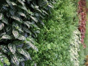 Living Plant Walls(1)