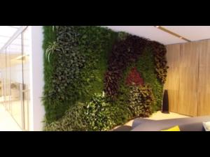 Living Plant Walls(11)