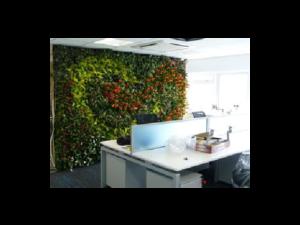 Living Plant Walls(12)