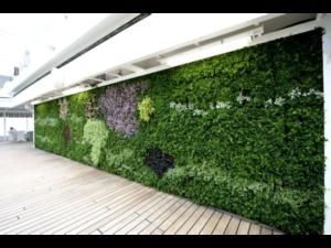 Living Plant Walls(3)