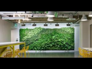 Living Plant Walls(9)